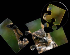 PuzzleTouch Free Online Jigsaw Puzzles